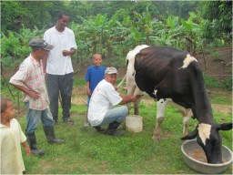 Learning to milk cows