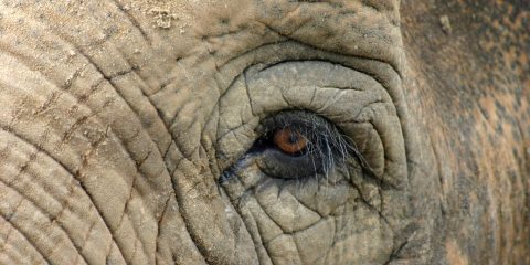 elephant-eye-portrait