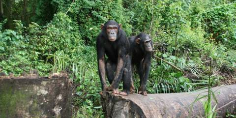 Lwiro Primate Rehabilitation Centre