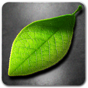 Falling Leaves Hd Live Wallpaper Apk Download Season Zen Hd V1 9 1 Apk Android App