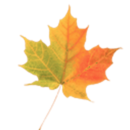 Falling Leaves Live Wallpaper Apk Download Autumn Leaves Donate Lwp V1 2 Apk Android App