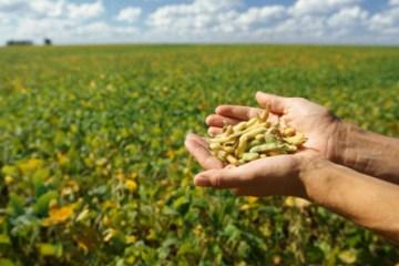 Soybean-farm