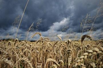 epa03347075 Dark clouds above a wheat field.