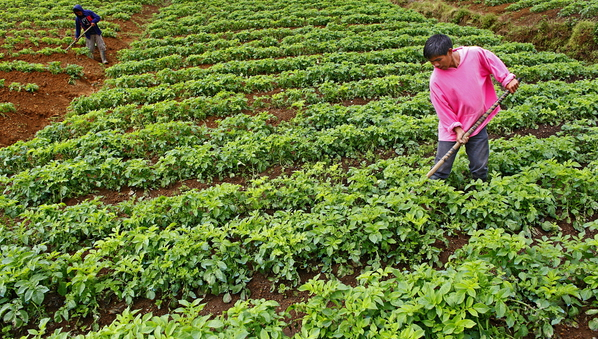 27 year old Sandy Bagne weeding his potato field in Malicong.