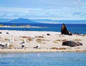 Bahia Bustamante
