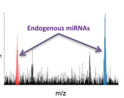 Direct detection of endogenous MicroRNAs and their post-transcriptional modifications in cancer serum by capillary electrophoresis-mass spectrometry