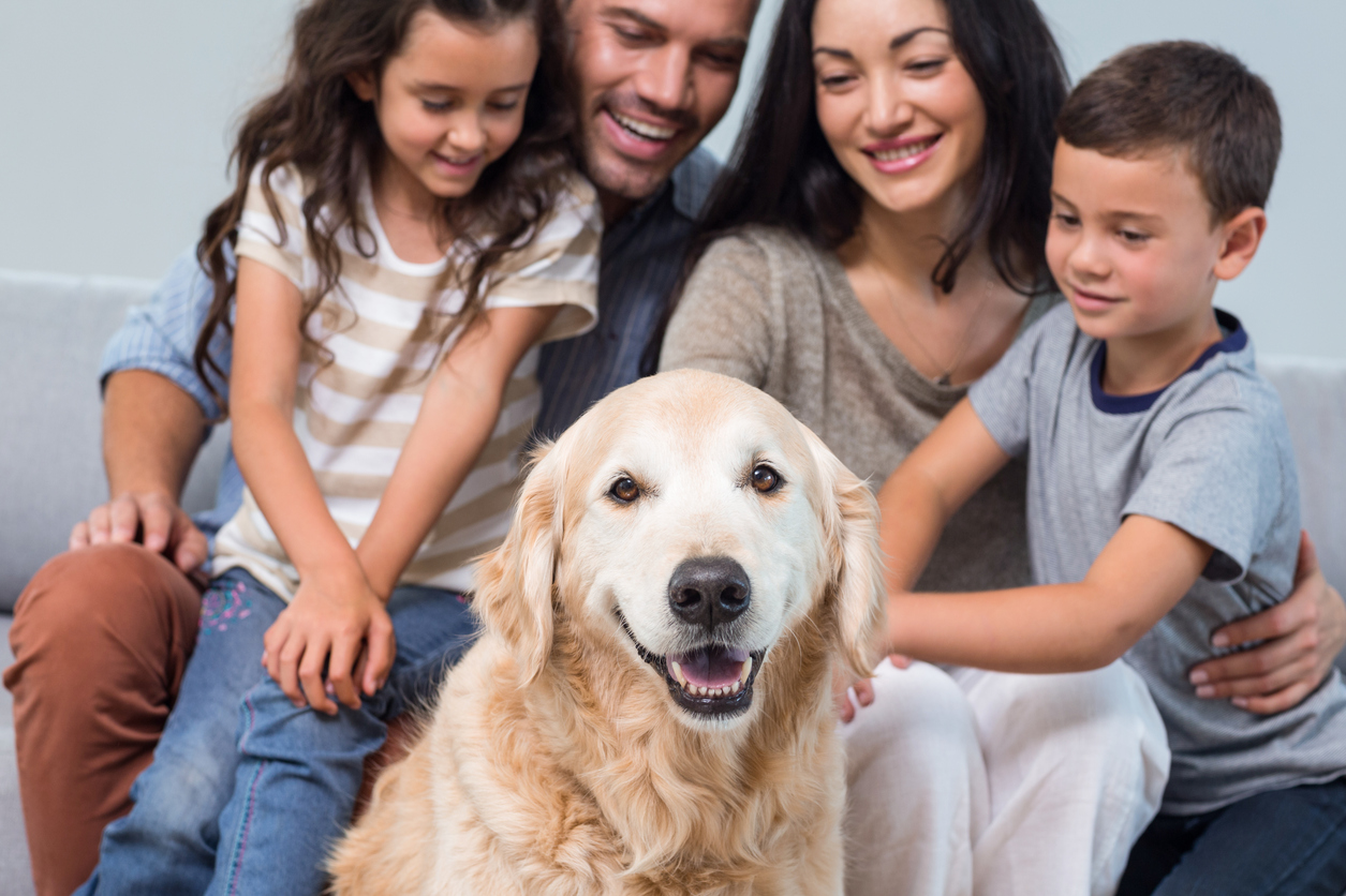 Mesmerizing Times Global Newsbytes Blog Just Anor Site Page Dogs Have Long Been Called But A Major Newscientific Study Now Indicates That A Dog May Be A Friend bark post Best Therapy Dogs