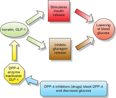 DPP-4 INHIBITORS - Dipeptidyl peptidase-4 inhibitor - Gliptins