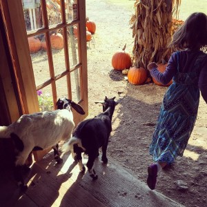 Ava with pygmy goats