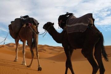 global voyages viaggi marocco