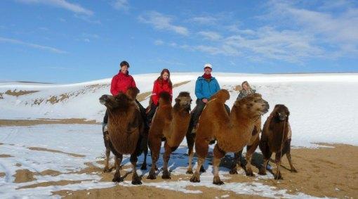 Wild Family Explorer, Gobi Desert, Mongolia