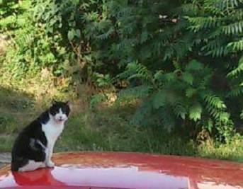 Świerczewo, zaginął kot