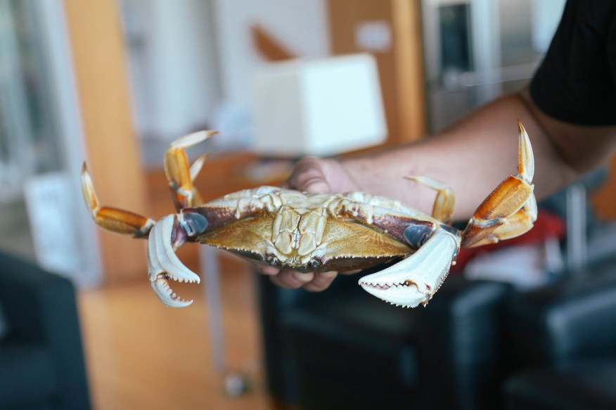 Mike holding the crab