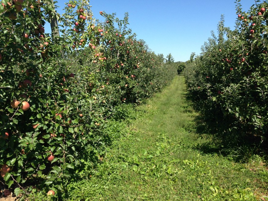 farms- apple orchards