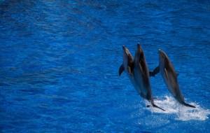 dolphin Morales Fallon