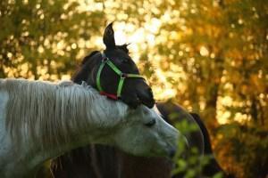 caballo Morales Fallon