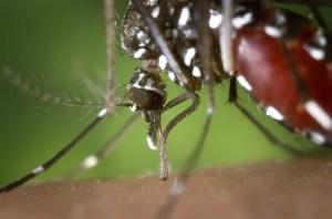 mosquito Morales Fallon