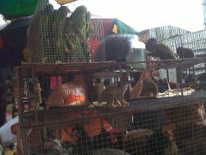 Tráfico animales silvestres Morales Fallon