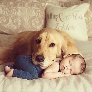 Babys instapet instababy instacool instacute pet love instalove dog ilovemydoghellip