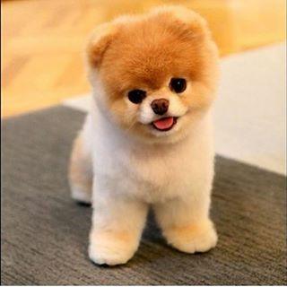 Cute dog baby instacute instadog instababy instapet pet ilovemydog cachorrohellip