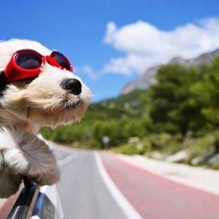 Si vas a salir de paseo con tu mascota tenhellip