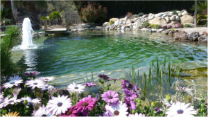 piscina2 Morales Fallon