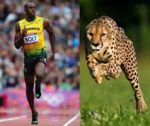 atleta Morales Fallon