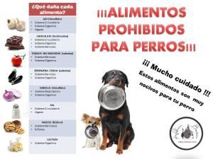 alimentos prohibidos perros Morales Fallon