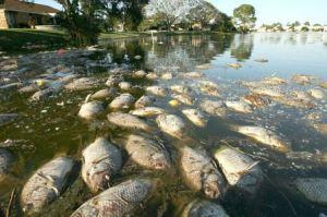 lluvia acida consecuencias Morales Fallon