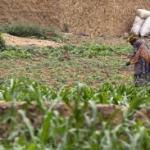 Songhai Farm: How To Start A Training Program And Songhai Farm Address