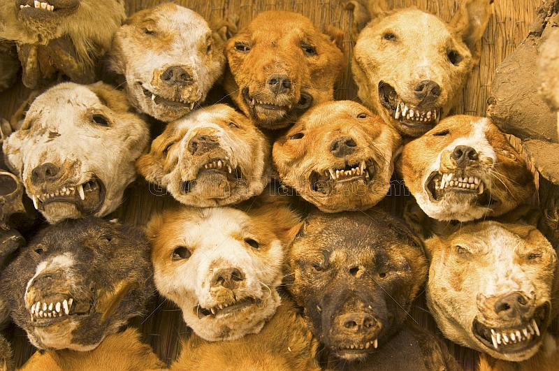Gone Travelling Blog Photo Of The Month Dried Dog Heads In Fetish Market