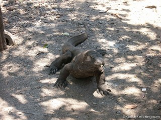Win A Free Trip to Komodo National Park (Airfare Included)