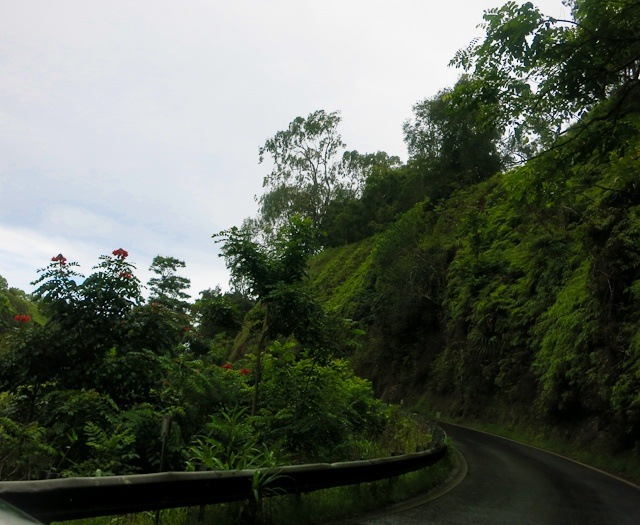 On the Hana Highway, the whole drive looks like this. Seriously.