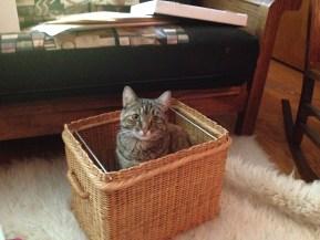 File Cat