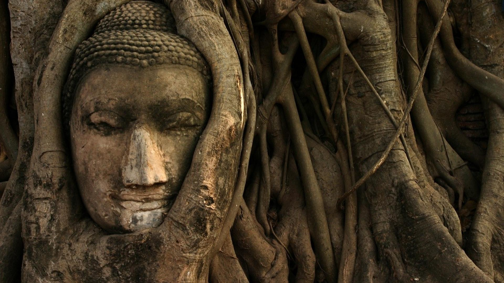 Download Lord Buddha Images Gautam Buddha Images Lord Buddha Photos Pics And Hd Wallpapers