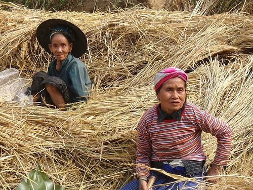 muangngoi-laos-women-rice field workers