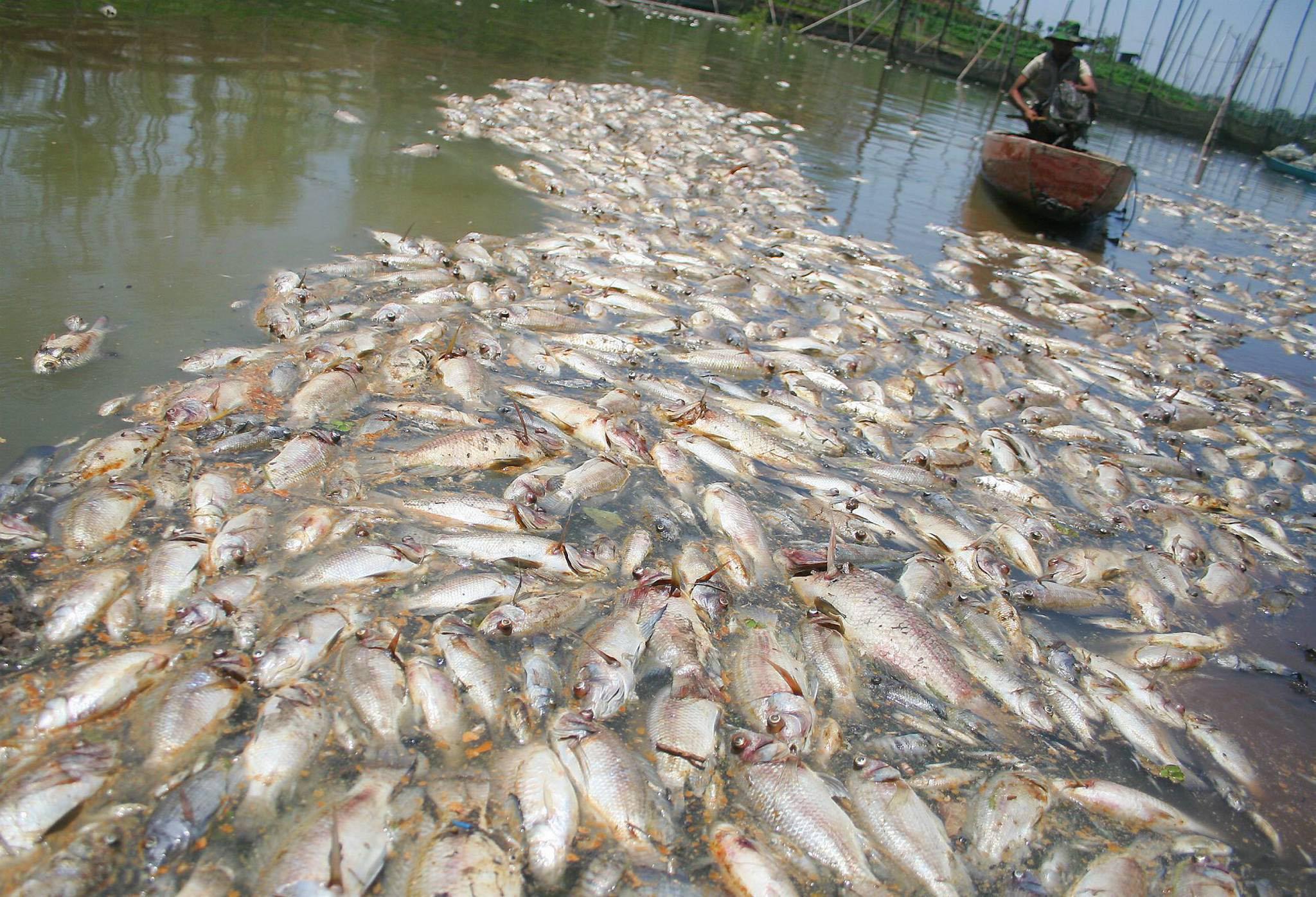 Macam Macam Tanaman Lumut Budidaya Tanaman Pembibitan Perawatan Pengaruh Pencemaran Air Terhadap Kehidupan Akuatik Goeners