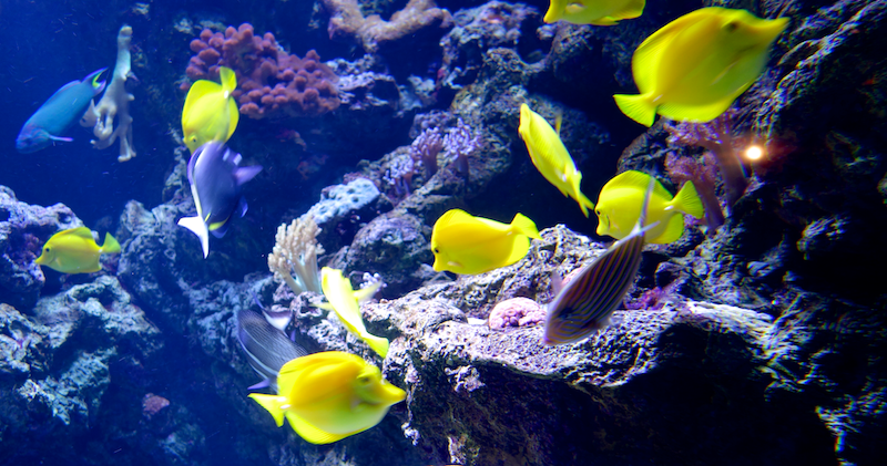 colorful fish in tank