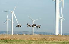 Obiettivo 5300 MW eolici installati per la fine dell'anno in Canada.