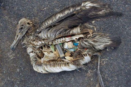 uccello-plastica-morto