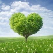 albero-love-san-valentino