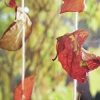 Herbstliche Fensterdeko Selber Machen
