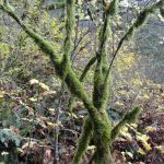 Mossy branches