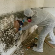 What Happens When the Mold Remediation Company Comes?