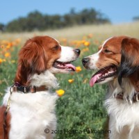 Our Dogs And Breeding Plans