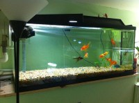Fish Tank Setup | Fresh Water Step-By-Step Guide for ...