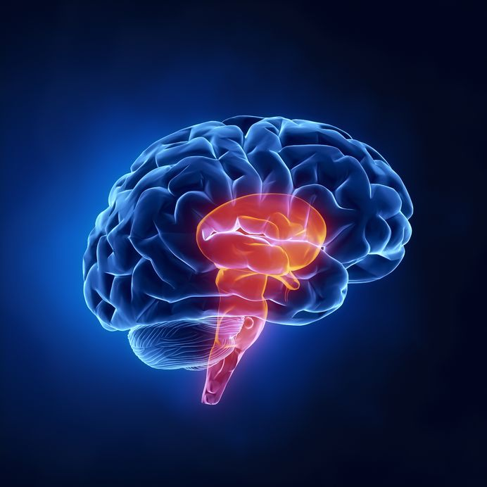 Physical Exam Tips The Nervous System GomerBlog