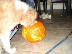 Small Of How Much Pumpkin To Give A Dog
