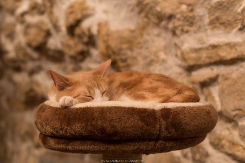 Le cafe des chats, Paris-18