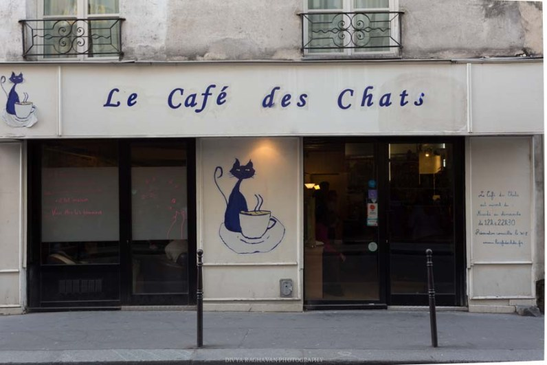 Le cafe des chats, Paris